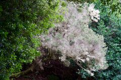 Wzrastał barwionego drzewa Zdjęcie Royalty Free