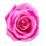Wzrastał kwiat Obrazy Royalty Free