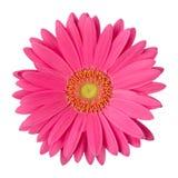 Wzrastał kwiat Zdjęcia Stock