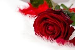 Wzrastał kwiat Obraz Stock