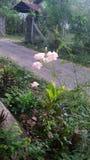Wzrastał kwiatu Obrazy Royalty Free