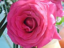 Wzrastał kwiatu zdjęcia stock