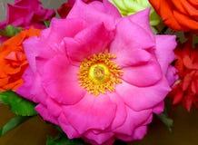 Wzrastał kwiatu makro- Obrazy Royalty Free