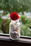 Wzrastał kwiatu na drewnianym tle Fotografia Stock