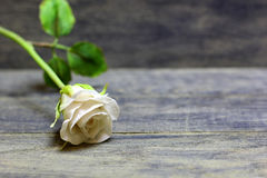 Wzrastał kwiatu na drewnianym tle Obrazy Stock