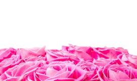 Wzrastał kwiaty Fotografia Royalty Free
