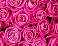 Wzrastał kwiaty Obraz Royalty Free