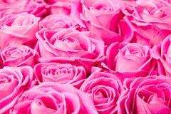 Wzrastał kwiaty Zdjęcia Royalty Free