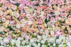 Wzrastał kwiaty dekoruje dla tła, tekstura Zdjęcia Royalty Free