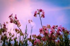Wzrastać niebo Fotografia Stock