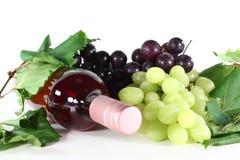 wzrastał wino Fotografia Stock