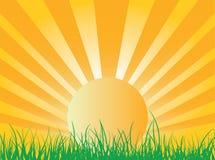 wzrosta słońce Fotografia Royalty Free