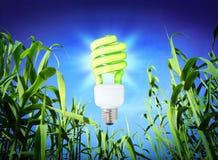 Wzrostowa ekologia zielony oświetlenie - ścisła fluorescencyjna lampa - zdjęcia royalty free