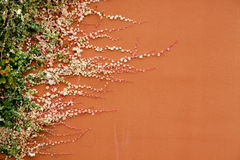 wzrostowa roślina Zdjęcia Royalty Free
