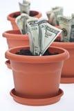wzrostowy pieniądze Obrazy Royalty Free