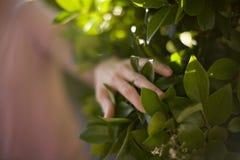 wzruszająca roślin kobieta Fotografia Stock