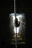 węzły liny Fotografia Stock