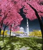 Xá Alam Mosque Selangor Fantasy do jardim imagens de stock royalty free
