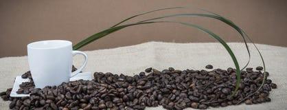 Xícaras de café nos feijões Imagens de Stock