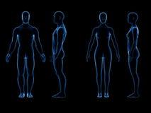 x光芒人的男女身体 解剖学概念 孤立, 3d回报 库存照片