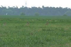 4x坐在领域的野兔 免版税库存图片