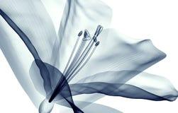 X射线辐射在白色隔绝的花,孤挺花的图象 库存照片