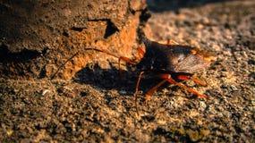 It& x27; ¡s un insecto! imagen de archivo