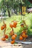 x28国王Coconuts &; Thembili& x29;在路的斯里兰卡果子报亭 库存照片