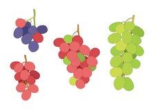 Grape currant and raisin fruit on white background  illustration vector stock illustration
