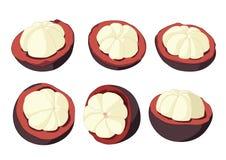 Mangosteen fruit on white background royalty free illustration