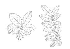 Skeletal  Leaves lined design on white background illustration vector royalty free illustration