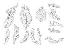 Line  Dry leaf on white background illustration vector royalty free illustration