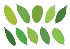 Leaves Green on white background royalty free illustration