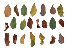 Colour brown dry leaf paint and Brown dry leaves autumn Down the ground vector illustration