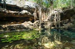 X-Batun Cenote - свежая вода бирюзы с лилиями воды Стоковые Изображения