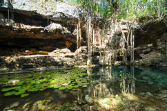 X-Batun Cenote - turquoise fresh water with water lilies. And rocky wall with fantastic tree roots Stock Images