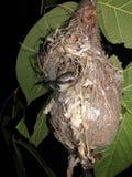 It& x27; belleza del pájaro de s con el hogar foto de archivo