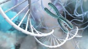 X-Chromosom und DNA stock abbildung