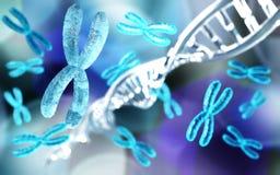 X-Chromosom und DNA lizenzfreie abbildung
