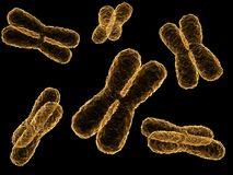 X - chromosomes Royalty Free Stock Photos