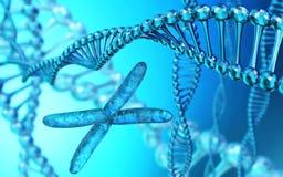 X cromossoma, ADN espiral, rendição 3d ilustração royalty free