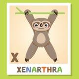 X est pour Xenarthra Lettre X Xenarthra, illustration mignonne blanc animal de vecteur de fonds d'image d'alphabet Photo libre de droits
