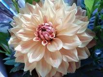 & x22; Flower& x22; Foto de Stock