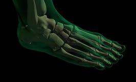 X-foot1 Fotografía de archivo