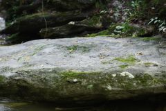 `Glam Rock` large flat river boulder background stock. This 6000 x 4000 HD photo features a very large flat boulder in a mountain stream. Photo by Zen Duder Stock Photos