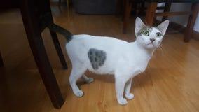 & x27; Heart& x27; gatto immagine stock libera da diritti
