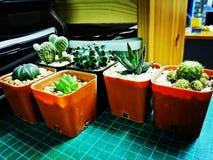 5& x27; Kaktus lizenzfreie stockbilder