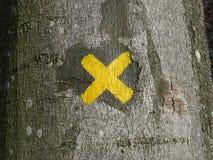 X marca em uma árvore Fotos de Stock Royalty Free