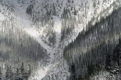 X Marks the Spot snow trees Stock Photos