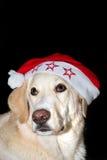 X-mas dog Stock Images
